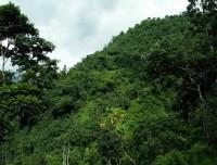 Green Countryside of Kanchenjunga